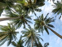ธุรกิจระดับโลกใช้ดาวเทียมตรวจจับสวนปาล์มรุกป่า