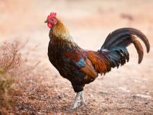 จีนเตือน  อาจเกิดการระบาดครั้งใหญ่เชื้อไข้หวัดนกใน...
