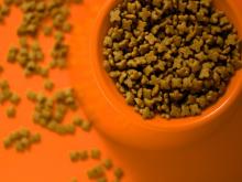 EU เตรียมปลดแบนส่วนผสมจากสัตว์ในอาหารสัตว์