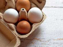 บราซิลเปิดตลาดส่งออกไข่ใหม่ 2 แห่งในตลาดอเมริกาใต้...