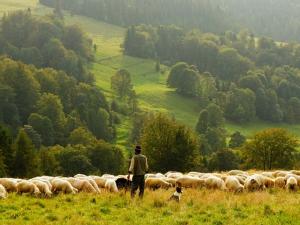 เกษตรกร US ปลื้ม รัฐขยายตลาดเนื้อสัตว์ทั่วโลก