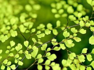 สหรัฐฯ ประกาศค่า MRLs ของสารกำจัดศัตรูพืช acetochl...
