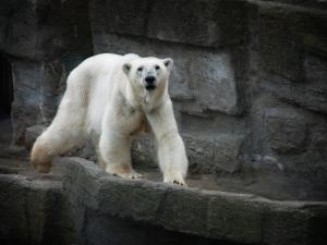 หมีขาวลงนามร่วมแชร์ข้อมูลลุงแซม-ไขปัญหา IUU