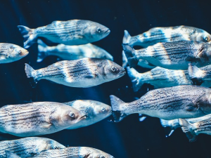 สถานการณ์ตลาดสินค้าสัตว์น้ำในสหภาพยุโรป