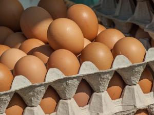ซิมบับเว หันนำเข้าไข่ฟักแก้วิกฤติขาดแคลน EU