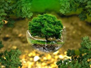 ศาลสหรัฐฯ ตัดสิน พืชอินทรีย์ปลูกไร้ดินได้มาตรฐาน N...