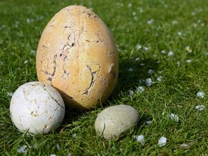 """มะกันคิดค้น """"ไข่เทียม"""" จากพืช เพื่อสวัสดิภาพไก่ไข่"""