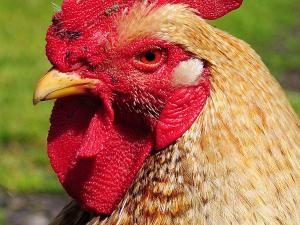 จีน พบผู้เสียชีวิตรายแรกจากไข้หวัดนกสายพันธุ์ H5N6