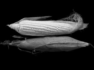 รัสเซียเตรียมแบน GMO ในอุตสาหกรรมอาหาร