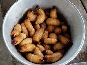 ฟินแลนด์เตรียมออกคู่มือใช้แมลงเป็นอาหารมนุษย์