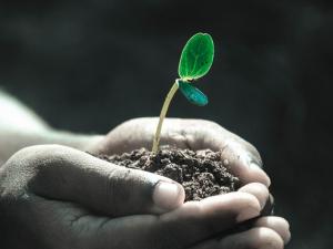 ยุโรปแจ้งรับข้อคิดเห็นระเบียบสารอารักขาพืช MRLs