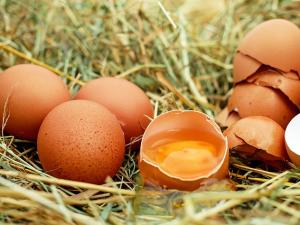 รวันดาทุ่มงบซื้อไข่แจกเด็ก แก้ปัญหาโภชนาการ-ผ่าทาง...