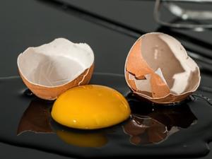 บัลแกเรีย พบไข่แดงผงนำเข้าปนเปื้อน Fipronil