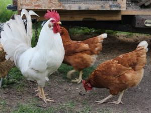 จีนพบผู้ป่วยไข้หวัดนกสายพันธุ์ H10N8 รายแรกของโลก
