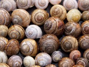 EU สั่งปรับวิธีตรวจหาสารพิษในหอย