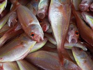 ไทย ประกาศห้ามนำเข้าปลาหมอ 3 ชนิด