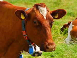 มะกันสั่งแบน เนื้อวัวบราซิลตกมาตรฐานอื้อ
