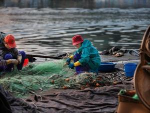 ซูเปอร์มาร์เก็ตอังกฤษออกแนวทางป้องกันการลดลงของปลา...