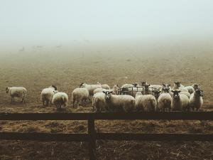 สถานการณ์สุขภาพสัตว์หลัง Brexit
