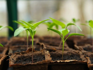 รัสเซียแก้ไขข้อกำหนดด้านสุขอนามัยพืชของ EAEU