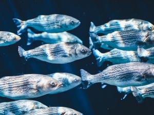 อียูแบนนำเข้าปลา 3 ประเทศ-ส่งสัญญาณเตือนคู่ค้าฝ่าฝ...