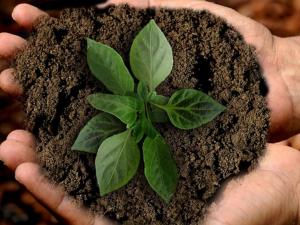 สหภาพยุโรป (EU) ออกข้อเสนอกฏระเบียบเกษตรอินทรีย์ฉบ...