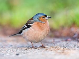 UK เฝ้าระวังนกป่ารัสเซียหลังมีรายงานไข้หวัดนก
